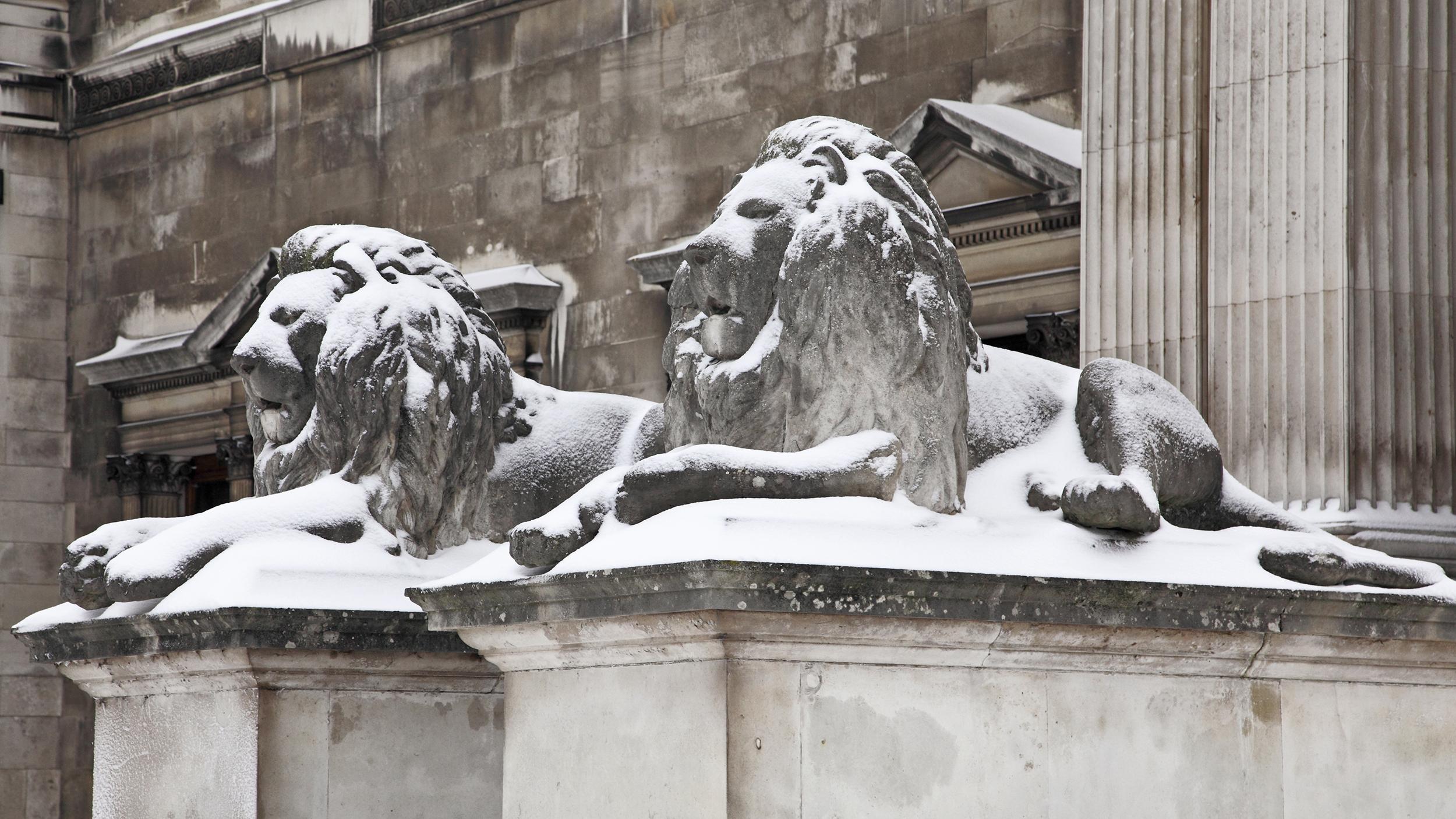 Fitzwilliam Lions Snow